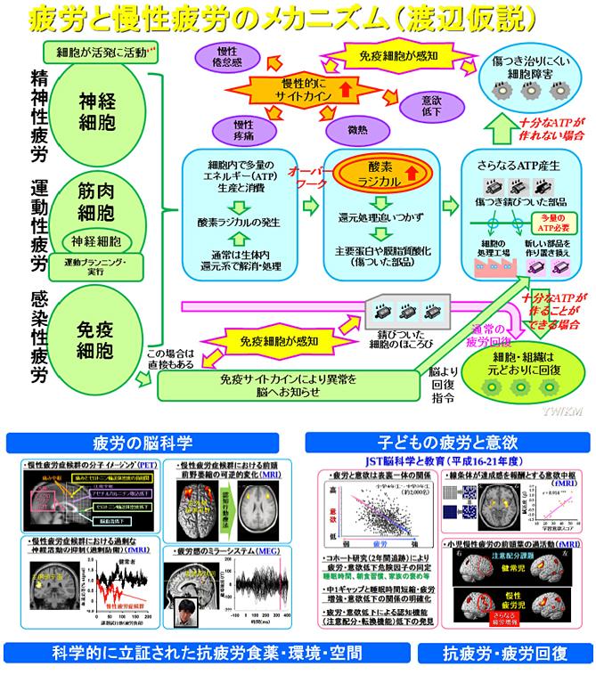 図4.疲労と慢性疲労のメカニズム(渡辺説)